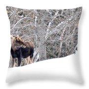 Hello Moose Throw Pillow
