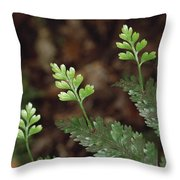 Hen And Chicken Fern Asplenium Throw Pillow