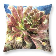 Hen And Chicks Plant Throw Pillow