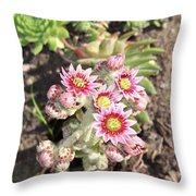 Hens And Chicks Flowers Throw Pillow