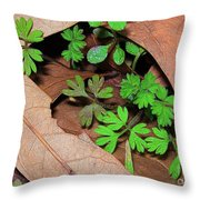 Here Comes Spring Throw Pillow