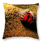 Hermit Crab On Coral Throw Pillow