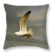 Herring Gull Larus Argentatus Throw Pillow