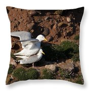 Herring Gulls Mating Throw Pillow
