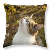 Hey Things Are Looking Up  Throw Pillow