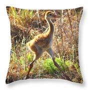 High Stepping Sandhill Chick Throw Pillow