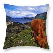 Highland Cattle, Scotland Throw Pillow