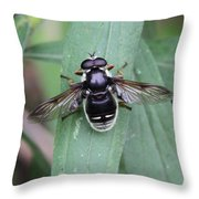 Highly Polished Throw Pillow