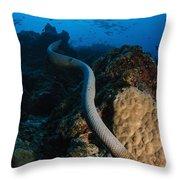 Highly Venomous Olive Sea Snake Throw Pillow