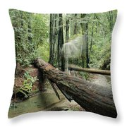 Hiker Moving Over A Fallen Redwood Tree Throw Pillow