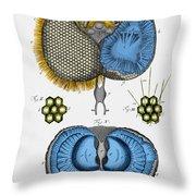 Historical Illustration Of Honey Bee Eye Throw Pillow