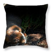 Hit The Otter Snooze Throw Pillow