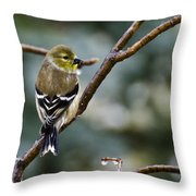 Ho Hum Bird In An Ice Storm Throw Pillow