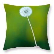 Holding On To The Last Days Of Summer Throw Pillow