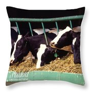 Holstein Dairy Cows Throw Pillow by Photo Researchers