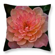 Honey Bunch Throw Pillow