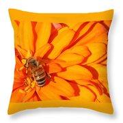 Honeybee On An Orange Zinnia Throw Pillow