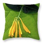 Honeysuckle Throw Pillow