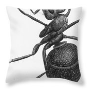 Hooke: Ant, 1665 Throw Pillow