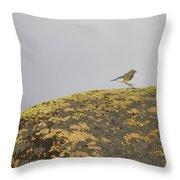Hopping Blue Bird Throw Pillow