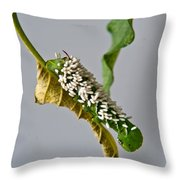 Hornworm With Braconid Wasp Parasites 2 Throw Pillow