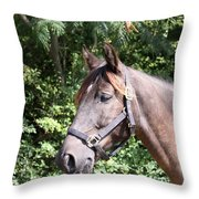 Horse At Mule Day In Benson Throw Pillow