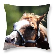 Horse At Mule Days 2012 - Benson Throw Pillow