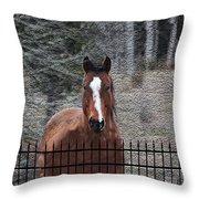Horse Behind The Fence Throw Pillow