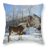 Horse On Maine Farm After Snow And Ice Storm Throw Pillow