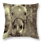 Horse Stare Throw Pillow