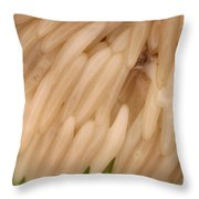 Horsefly Eggs Throw Pillow
