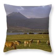 Horses Grazing, Macgillycuddys Reeks Throw Pillow