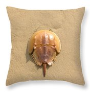 Horseshoe Crab In The Sand Campground Beach Cape Cod Eastham Ma Throw Pillow