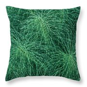 Horsetail Fern Throw Pillow