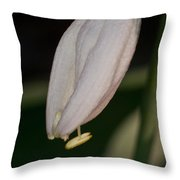 Host Blossom With Anther Protuding Throw Pillow