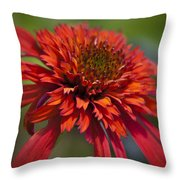 Hot Papaya Hybrid Coneflower Throw Pillow