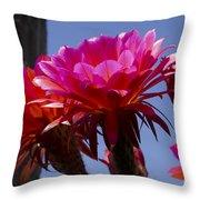 Hot Pink Cactus Flowers Throw Pillow