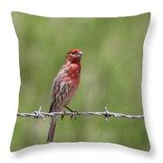 House Finch - Content Throw Pillow