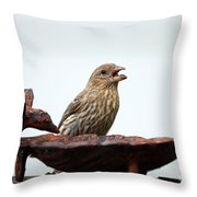 House Finch Eating Jelly Throw Pillow