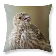 House Finch Profile Throw Pillow