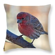 Housefinch IIi Throw Pillow