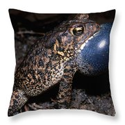 Houston Toad Throw Pillow
