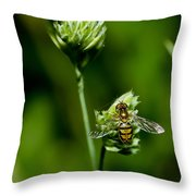 Hoverfly On Grass Throw Pillow