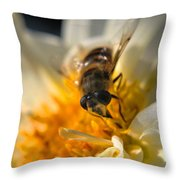 Hoverfly On White Flower Throw Pillow