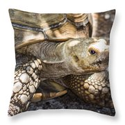 How Old Am I Throw Pillow