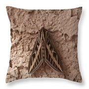 Huge Moth On Stucco In Las Vegas Throw Pillow