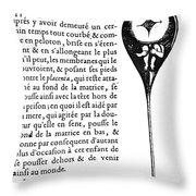 Human Sperm - 17th Century Throw Pillow