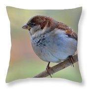 Humble Housesparrow Throw Pillow