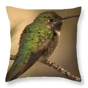 Humming Bird On Branch Throw Pillow