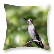 Hummingbird - Berries Throw Pillow